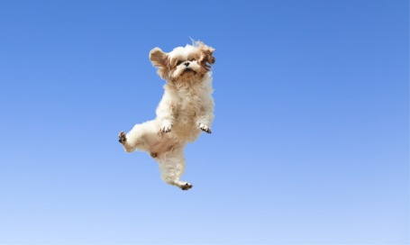 jumping-for-joy-18